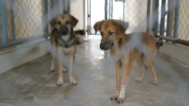 Homeless dogs in shelter behind cage net. Looking and waiting for people to come adopt