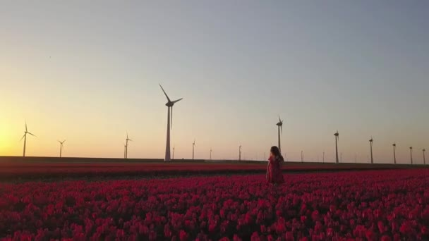 Girl posing in field of tulips and wind turbines at sunset, aerial view
