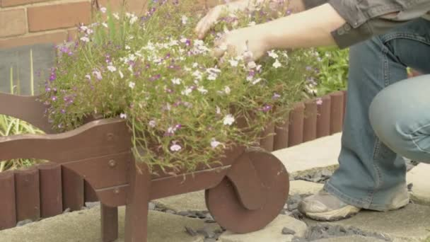 Gardener inspecting flower arrangement in wheelbarrow