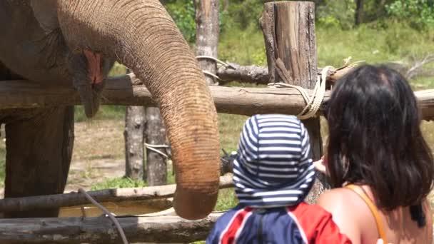 Sloní pozdrav matka a dítě se sloní trup, zblízka