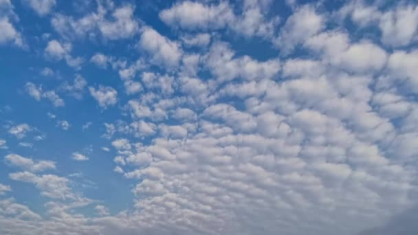 Blauer Himmel weiße Wolken. Geschwollene flauschige weiße Wolken. Kumuluswolke. Sommerblauer Himmel im Zeitraffer. Die Natur witterte blauen Himmel. Weiße Wolken im Hintergrund. Himmel klar, schöner wolkenblauer Himmel mit Wolken in 4K.
