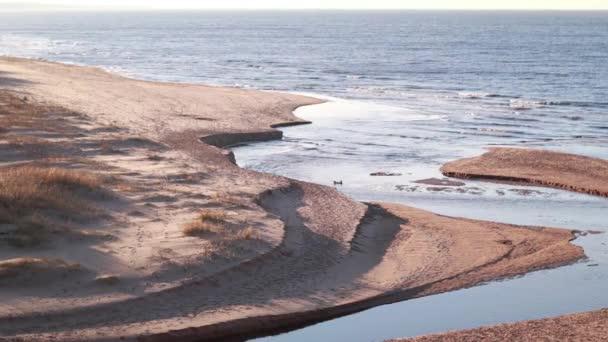 Střední řeka tekoucí do moře. Baltské moře a duny krajina. Meandrující výhled na řeku a pláž. Ústí