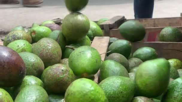 Avokádo ovoce spadají do krabic vykládání se připravte se vystavit v ovocnářství.