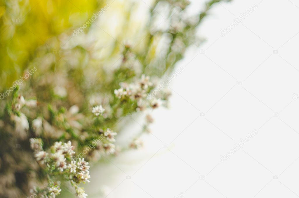 Abstract defocus grass in soft warm light flowers background. Green floral art design. Rustic style.