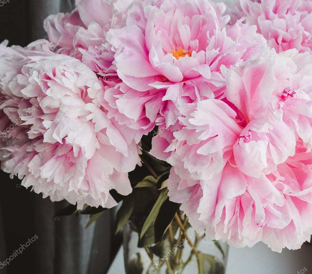 Beauty bunch of pink peonies peony flowers in vase background beauty bunch of pink peonies peony flowers in vase background spring or summer lovely bouquet reviewsmspy