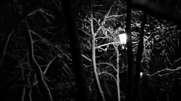 Noční zimní Street Lamp sníh taje černobílé záběry