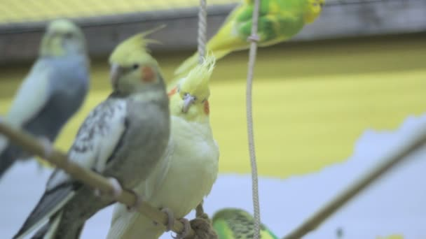 two parrots on a tree swing 2