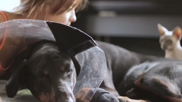 Triste della razza del cane Doberman medico collare gatto di primo piano che dà una occhiata in background