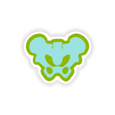paper sticker on white background pelvic bones