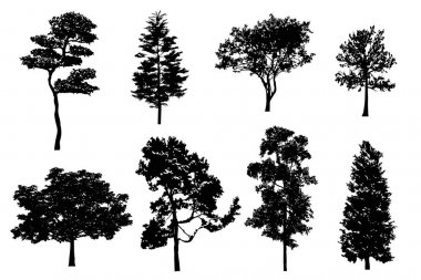 Detailed tree silhouettes. Set of black trees in silhouettes isolated on white background. Collection of different shapes forest trees. Vector illustration EPS10 icon
