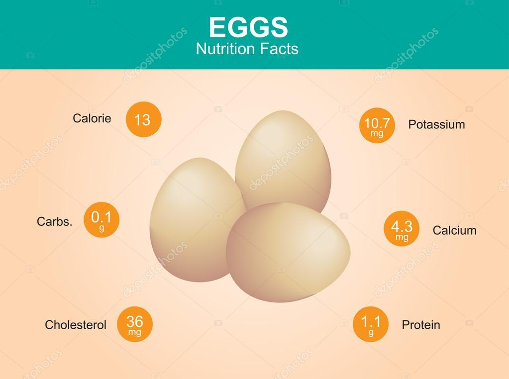egg nutrition facts, egg with information, eggs vector