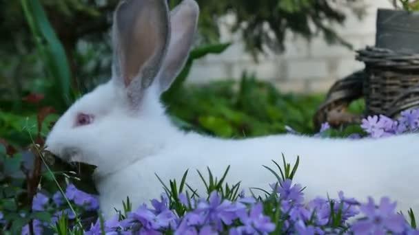 White Rabbit ist in lila Blumen
