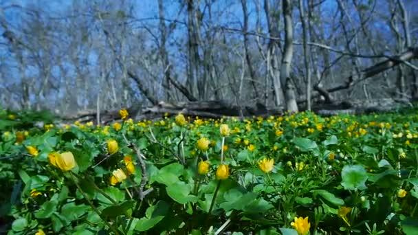 Les plný květy sněženek v jarní sezóně