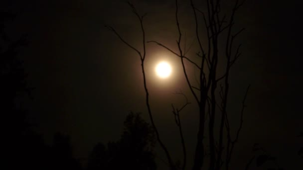 Pohyb měsíce. Mlha. Suchý strom