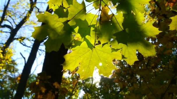 zelený Les s slunečního záření