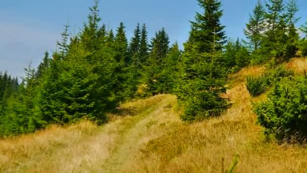 Mladá žena, jízda na horském kole terénní