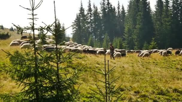 Pastýř s ovcí
