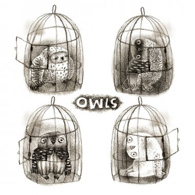 Four Pastel Owls in Birdcages