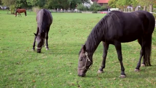 horses on a paddock grazing.