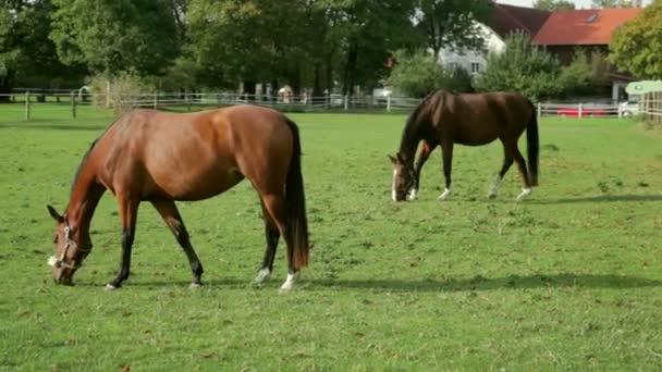 Pferde auf einer Koppel Weiden.