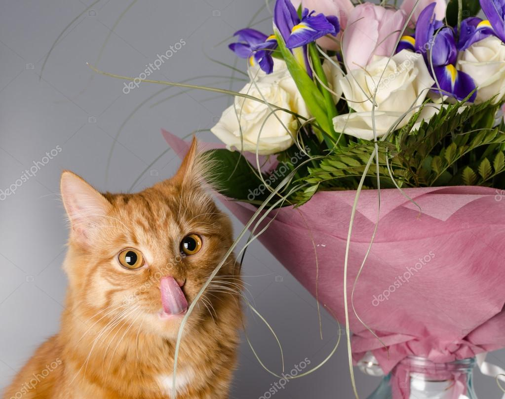 Ginger cat smells a bouquet of flowers. — Stock Photo © Pelagey ...