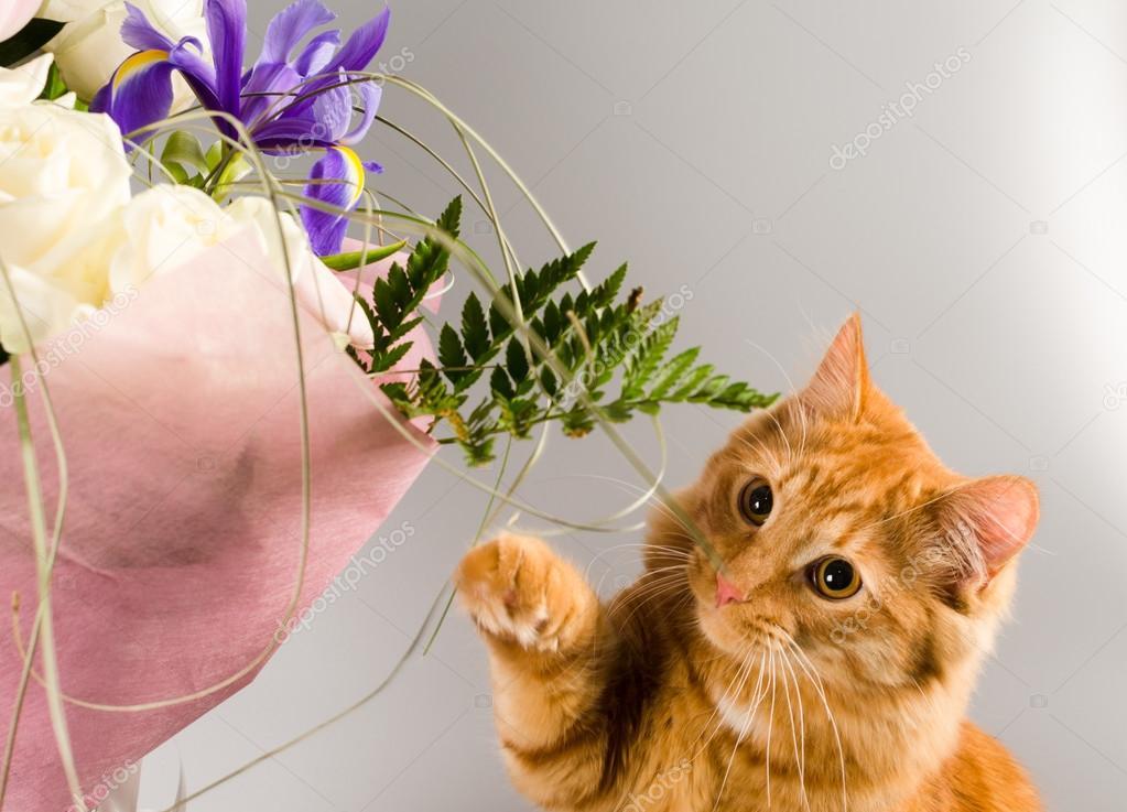 O gato Ginger cheira um buquê de flores — fotos de bancos de imagens