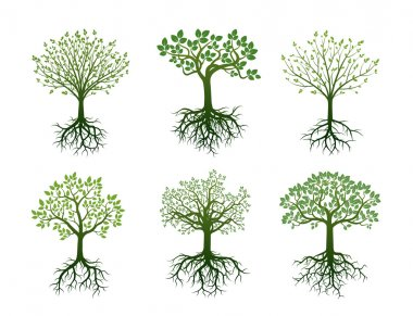 Shape of Trees, Roots and Leafs. Vector Illustration.