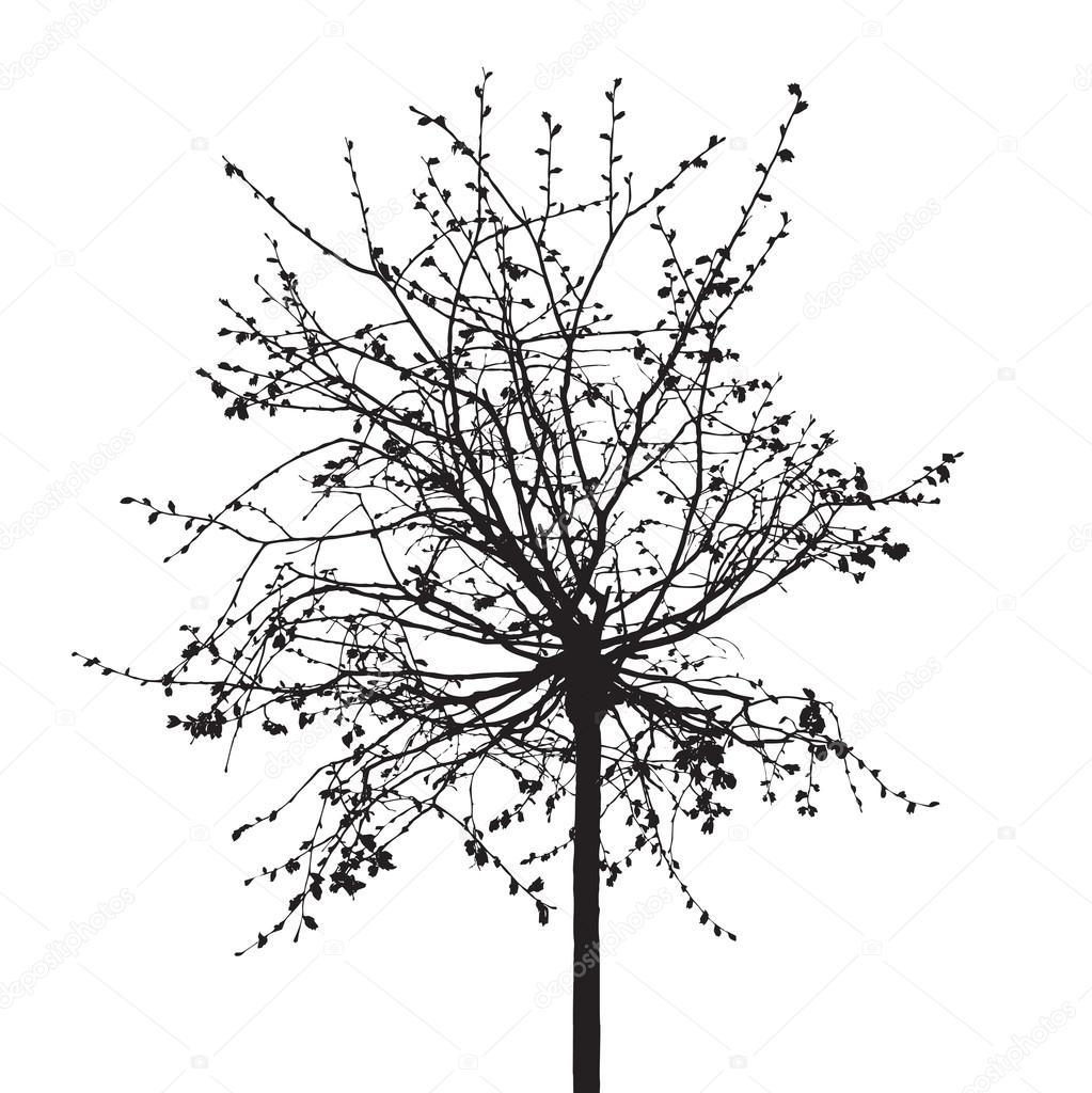 Мертвое дерево без листьев. Векторные иллюстрации ...