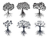 Photo Set of Black Trees and Roots