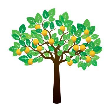 Lemon Tree and Fruits. Vector Illustration.