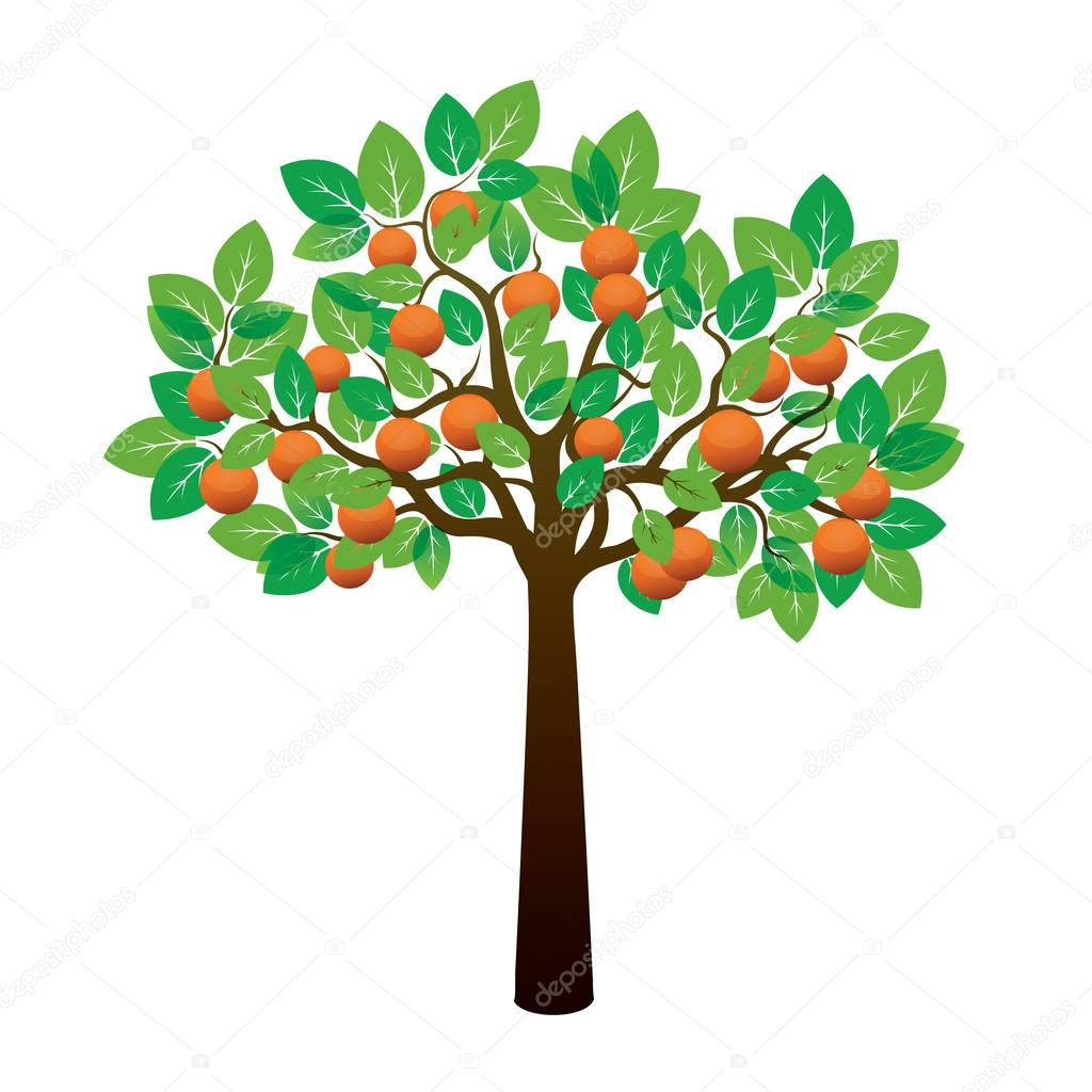 Orange Tree and Fruits. Vector Illustration.