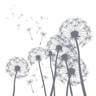 vector grey dandelion illlustrator