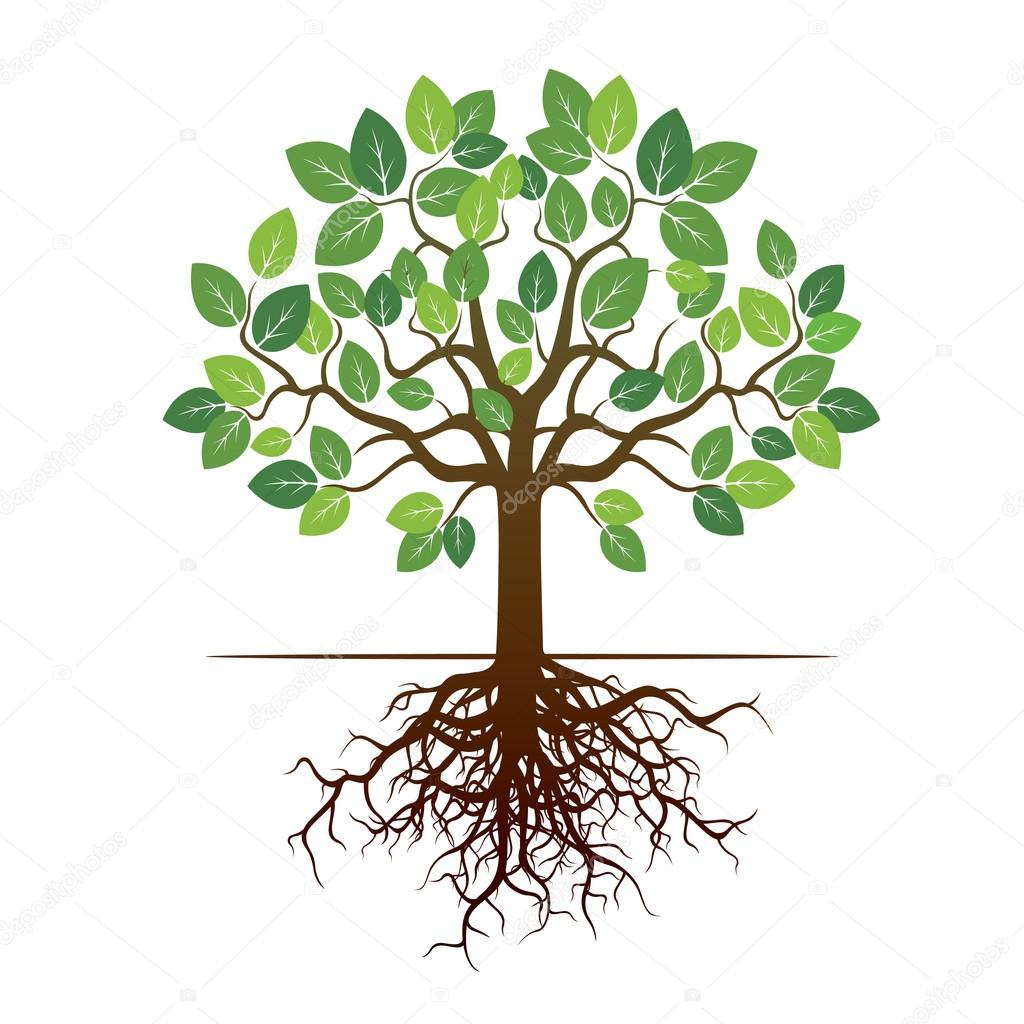 color tree and roots vector illustration stock vector rh depositphotos com tree with roots vector image tree roots vector download