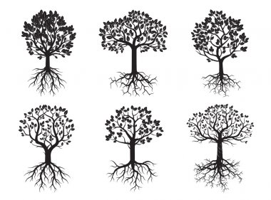 Set of Green Trees and Roots. Vector Illustration.