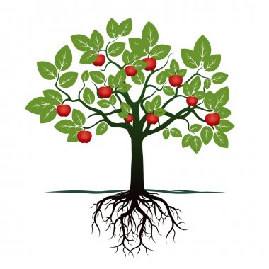 Young Tree with Green Leafs, Roots and Red Apples. Vector Illustration.