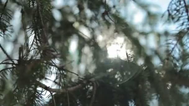 Nap ragyog át a fúj a szél fa zöld levelek