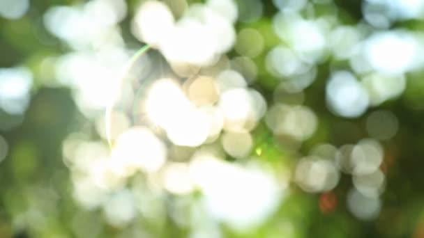 napos absztrakt zöld természet háttér