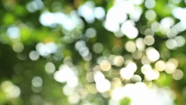 Sunny abstraktní zelené přírody pozadí