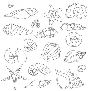 Shell And Marine Conch Collection Icons Set Vector Thin Line. Nature Ocean Shell For Shellfish, Aquatic Decorative Seashell Monochrome Contour Illustrations icon