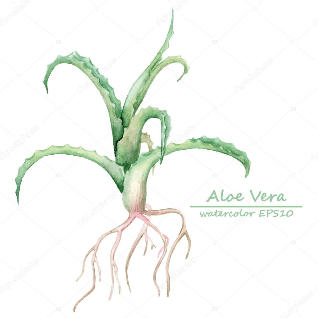 Watercolor aloe vera branch card template