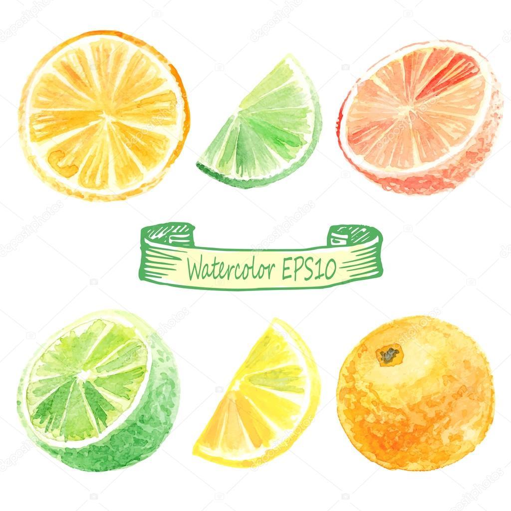 hand drawn watercolor illustration. Citrus set.