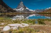 Fotografie Flowers on the lake near Matterhorn
