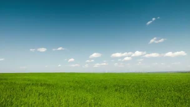 Modré mraky na pozadí zelené louce timelapse