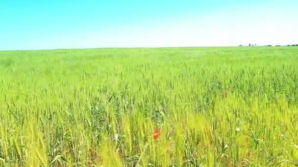 Zöld mező és kék ég
