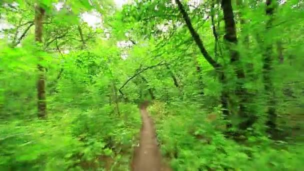 lese lesa. stromy pozadí. Zelená příroda. Divočina
