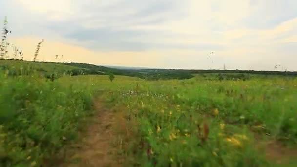 polní cesty na zelené louce víceleté trávy hrana