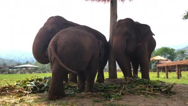 CHIANG MAI / THAILAND - 12. Mai 2018: Touristen reiten auf Elefanten Trekking in Thailand Junge Touristen reiten auf Elefanten durch den Dschungel im Maetaman Elephant Camp.