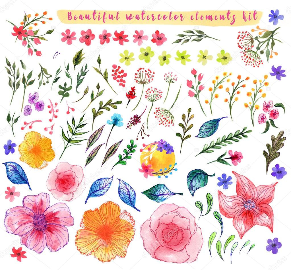 Set of nature design elements painted in watercolor on white paper.  flowers and herbs.