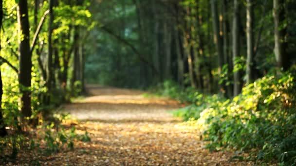 fallende Blätter, Wald, Landschaft, Herbst