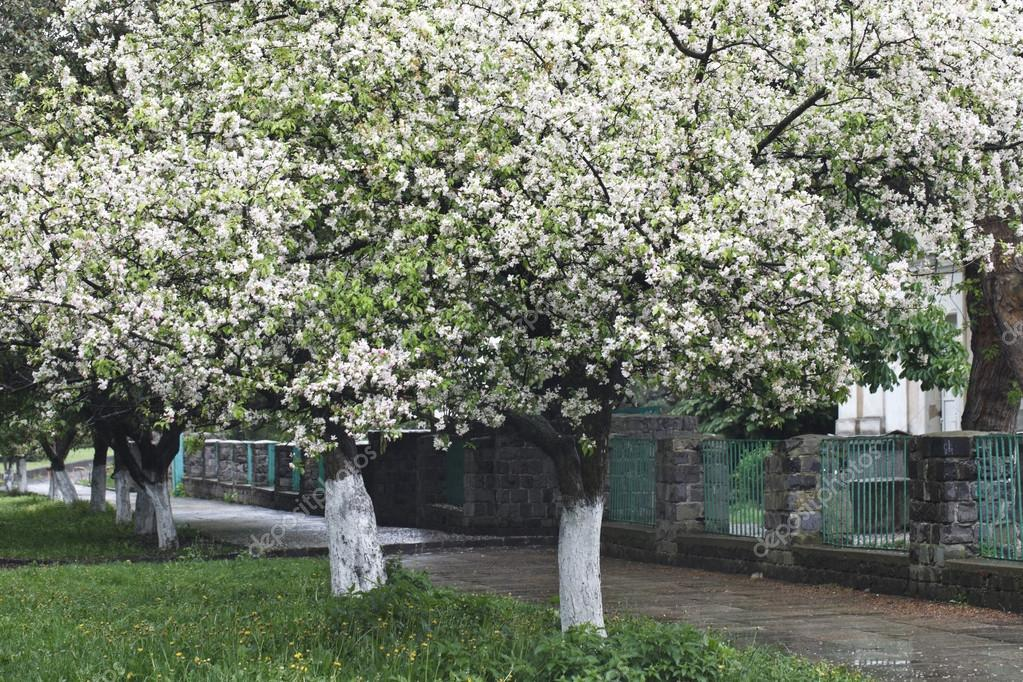 schöne weiß blühenden Bäumen — Stockfoto © HOMONSTOCK #74060883